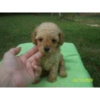 Dogs and Puppies for sale
