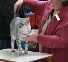 Canberra cat show - from 2007 from surferfirl143 (flickr)