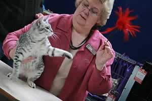 Canberra cat show - from 2007 from surferfirl143 (flickr) testing a cat's reflexes