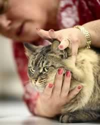 2009 cat show in Washington from Bala (flickr)