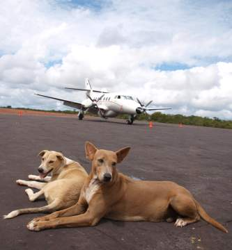 Dogs and airline travel