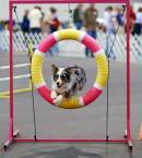 agility trials
