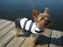 Doggy lifejacket