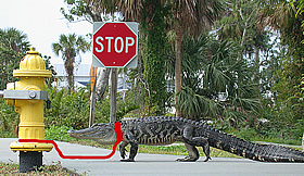 You may not tie your alligator to a fire hydrant in Michigan