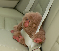 Gorillas may not ride in the back seat of a car ~ weird animal law