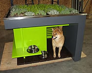 green dog houses with sustainable roofs