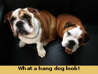 What a hang dog look!