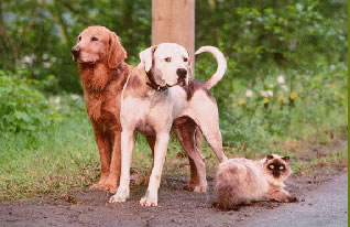 Homeward Bound Cast of animal characters