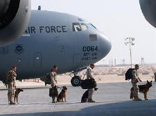military working dogs and handlers - US Air Force